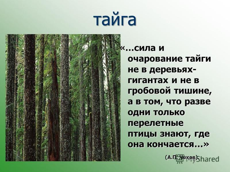 тайга «…сила и очарование тайги не в деревьях- гигантах и не в гробовой тишине, а в том, что разве одни только перелетные птицы знают, где она кончается…» (А.П. Чехов).