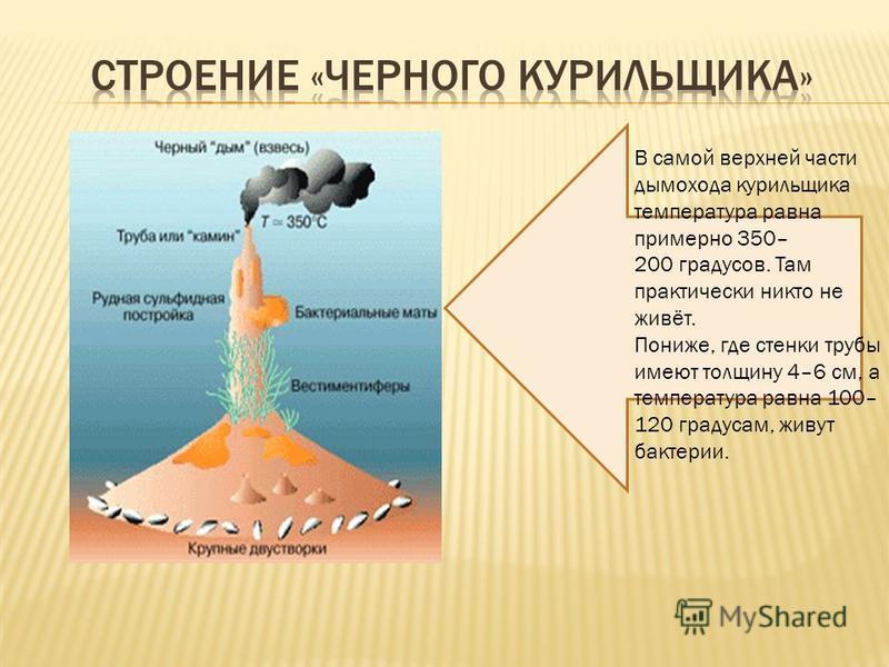 В самой верхней части дымохода курильщика температура равна примерно 350– 200 градусов. Там практически никто не живёт. Пониже, где стенки трубы имеют толщину 4–6 см, а температура равна 100– 120 градусам, живут бактерии.