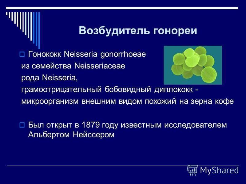 Возбудитель гонореи Гонококк Neisseria gonorrhoeae из семейства Neisseriaceae рода Neisseria, грамотрицательный бобовидный диплококк - микроорганизм внешним видом похожий на зерна кофе Был открыт в 1879 году известным исследователем Альбертом Нейссер