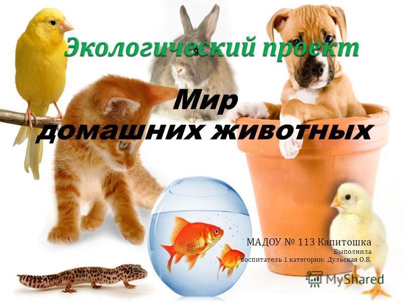 Мир домашних животных МАДОУ 113 Капитошка Выполнила воспитатель 1 категории : Дульская О. В.