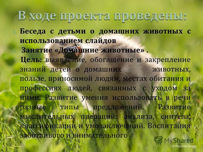 1. Беседа с детьми о домашних животных с использованием слайдов 2. Занятие « Домашние животные ». Цель : выявление, обогащение и закрепление знаний детей о домашних животных, пользе, приносимой людям, местах обитания и профессиях людей, связанных с у