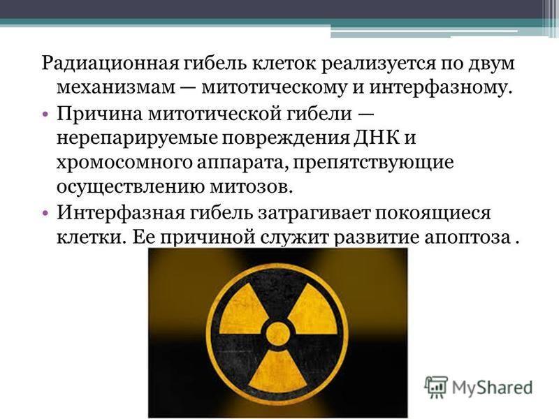 Радиационная гибель клеток реализуется по двум механизмам митотическому и интерфазному. Причина митотической гибели нерепарируемые повреждения ДНК и хромосомного аппарата, препятствующие осуществлению митозов. Интерфазная гибель затрагивает покоящиес
