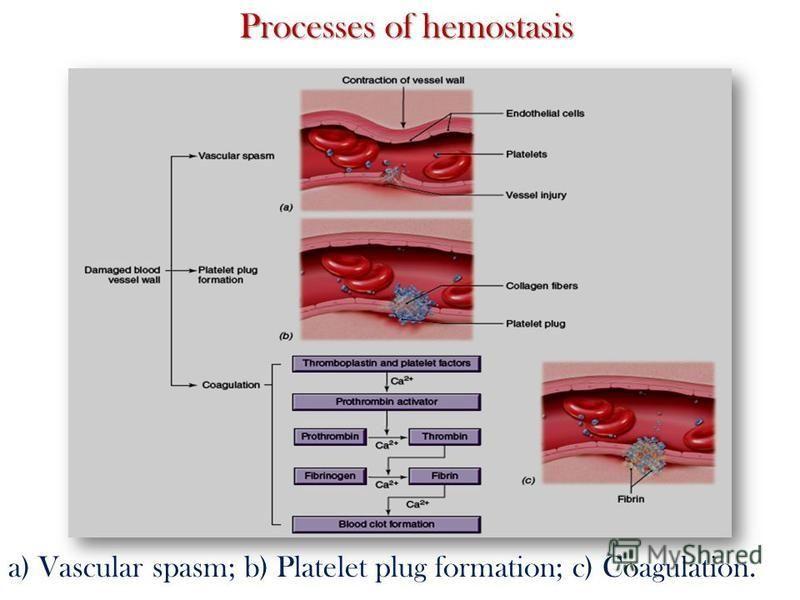 Processes of hemostasis a) Vascular spasm; b) Platelet plug formation; c) Coagulation.