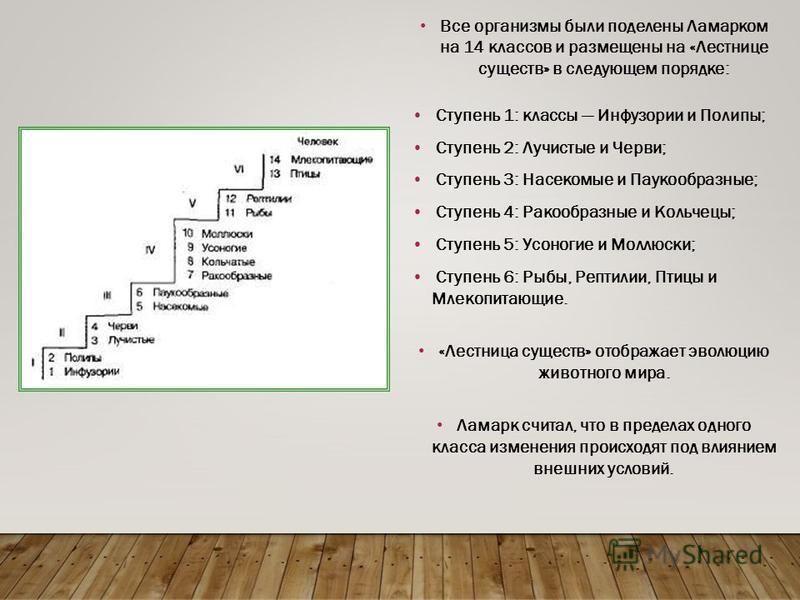 Все организмы были поделены Ламарком на 14 классов и размещены на «Лестнице существ» в следующем порядке: Ступень 1: классы Инфузории и Полипы; Ступень 2: Лучистые и Черви; Ступень 3: Насекомые и Паукообразные; Ступень 4: Ракообразные и Кольчецы; Сту