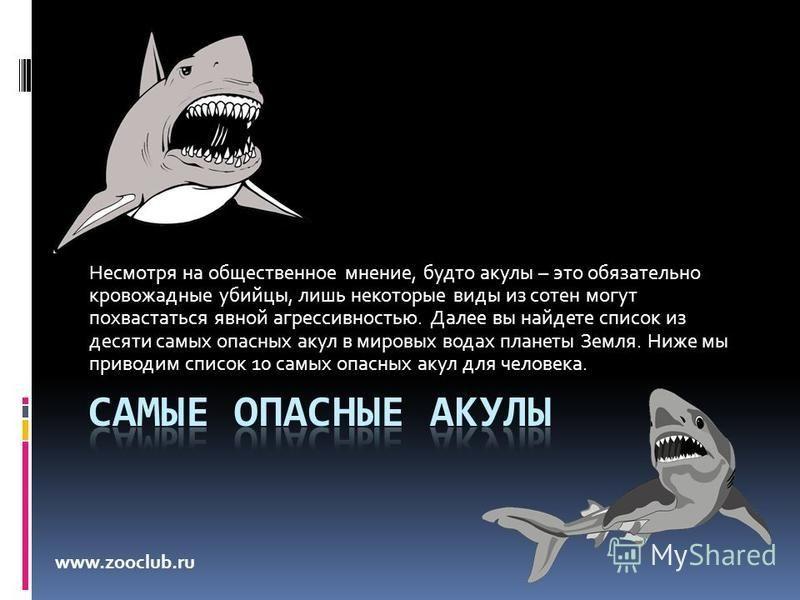 Несмотря на общественное мнение, будто акулы – это обязательно кровожадные убийцы, лишь некоторые виды из сотен могут похвастаться явной агрессивностью. Далее вы найдете список из десяти самых опасных акул в мировых водах планеты Земля. Ниже мы приво