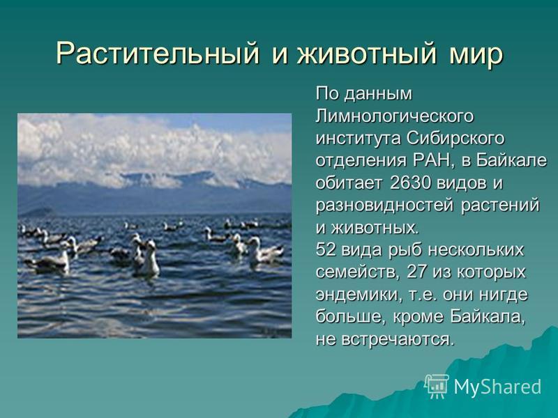 Происхождение озера Происхождение озера до сих пор вызывает научные споры. Возраст озера ученые традиционно определяют в 25 – 35 млн. лет. Этот факт также делает Байкал уникальным природным объектом, так как большинство озер, особенно ледникового про