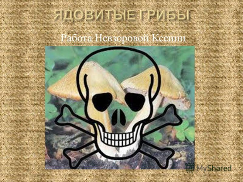 Работа Невзоровой Ксении