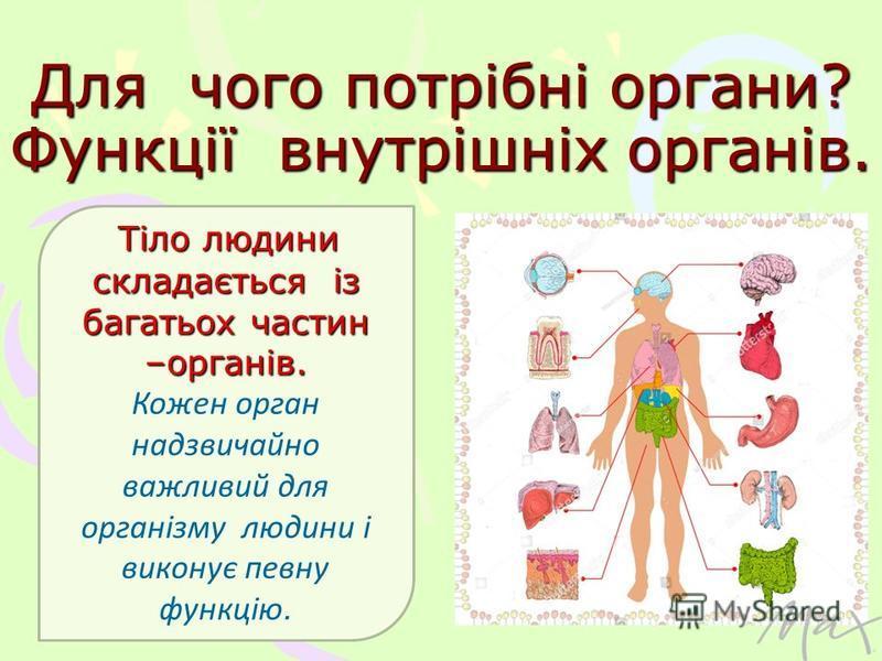 Для чого потрібні органи? Функції внутрішніх органів. Тіло людини складається із багатьох частин –органів. Кожен орган надзвичайно важливий для організму людини і виконує певну функцію.