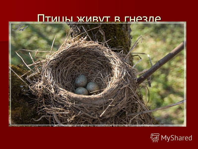 Птицы живут в гнезде