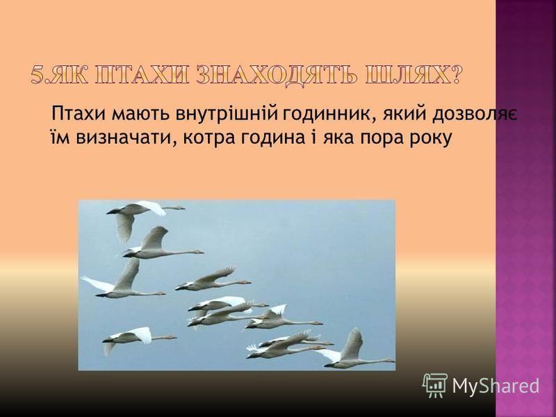 Птахи мають внутрішній годинник, який дозволяє їм визначати, котра година і яка пора року