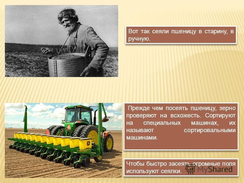 Чтобы быстро засеять огромные поля используют сеялки. Вот так сеяли пшеницу в старину, в ручную. Прежде чем посеять пшеницу, зерно проверяют на всхожесть. Сортируют на специальных машинах, их называют сортировальными машинами.