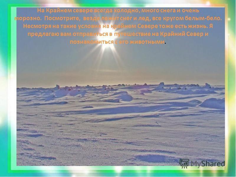 На Крайнем севере всегда холодно, много снега и очень морозно. Посмотрите, везде лежит снег и лед, все кругом белым-бело. Несмотря на такие условия на крайнем Севере тоже есть жизнь. Я предлагаю вам отправиться в путешествие на Крайний Север и познак