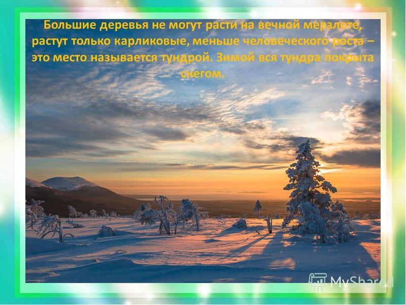 Большие деревья не могут расти на вечной мерзлоте, растут только карликовые, меньше человеческого роста – это место называется тундрой. Зимой вся тундра покрыта снегом.