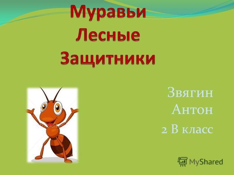 Звягин Антон 2 В класс