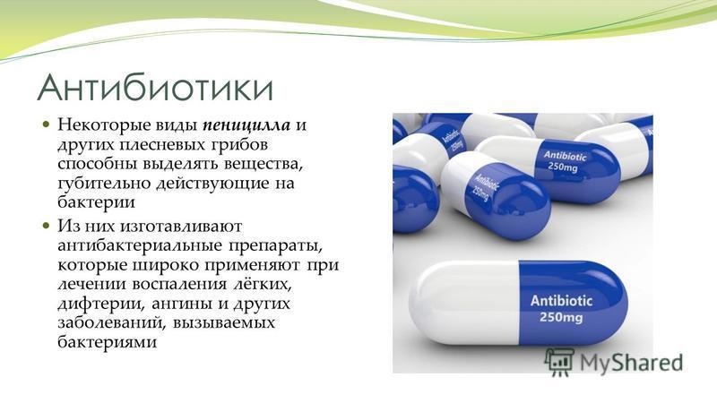 Антибиотики Некоторые виды пеницилла и других плесневых грибов способны выделять вещества, губительно действующие на бактерии Из них изготавливают антибактериальные препараты, которые широко применяют при лечении воспаления лёгких, дифтерии, ангины и