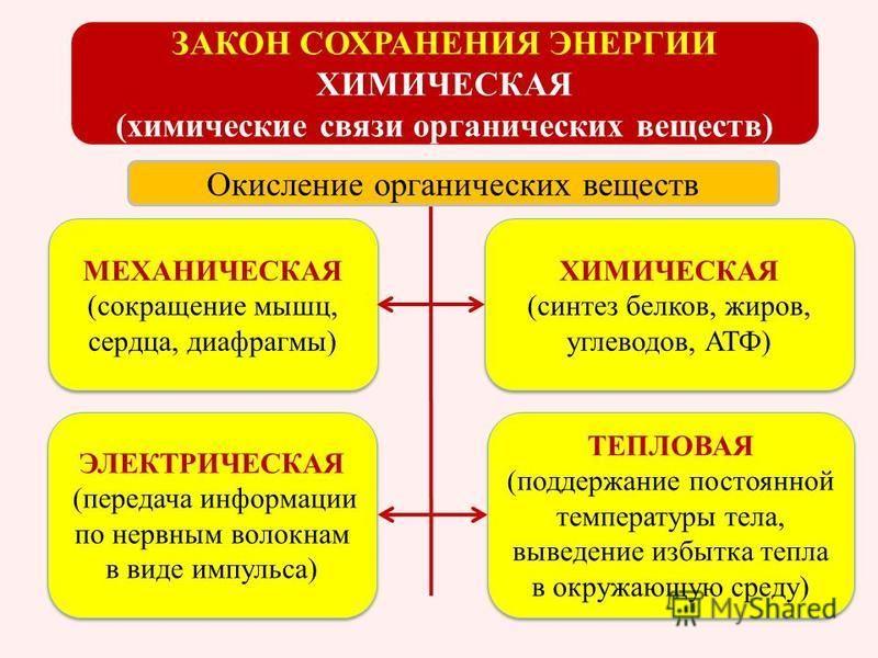 МЕХАНИЧЕСКАЯ (сокращение мышц, сердца, диафрагмы) МЕХАНИЧЕСКАЯ (сокращение мышц, сердца, диафрагмы) ХИМИЧЕСКАЯ (синтез белков, жиров, углеводов, АТФ) ХИМИЧЕСКАЯ (синтез белков, жиров, углеводов, АТФ) ЭЛЕКТРИЧЕСКАЯ (передача информации по нервным воло