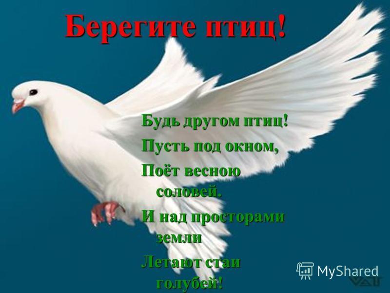 Будь другом птиц! Пусть под окном, Поёт весною соловей. И над просторами земли Летают стаи голубей! Берегите птиц!