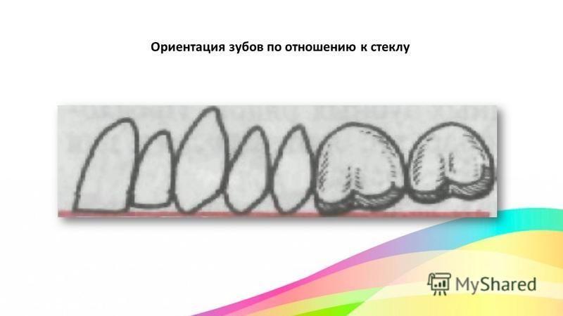 Ориентация зубов по отношению к стеклу