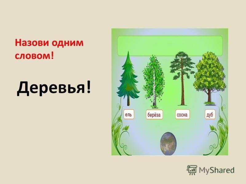 Назови одним словом! Деревья!