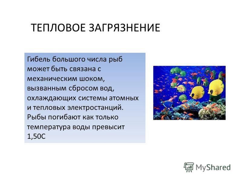 Гибель большого числа рыб может быть связана с механическим шоком, вызванным сбросом вод, охлаждающих системы атомных и тепловых электростанций. Рыбы погибают как только температура воды превысит 1,50С ТЕПЛОВОЕ ЗАГРЯЗНЕНИЕ
