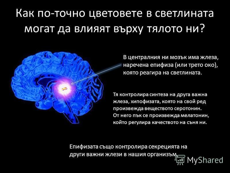 Как по-точно цветовете в светлината могат да влияят върху тялото ни? В централния ни мозък има жлеза, наречена епифиза (или трето око), която реагира на светлината. Тя контролира синтеза на друга важна жлеза, хипофизата, която на свой ред произвежда