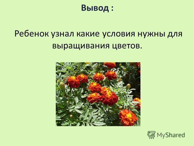 Вывод : Ребенок узнал какие условия нужны для выращивания цветов.
