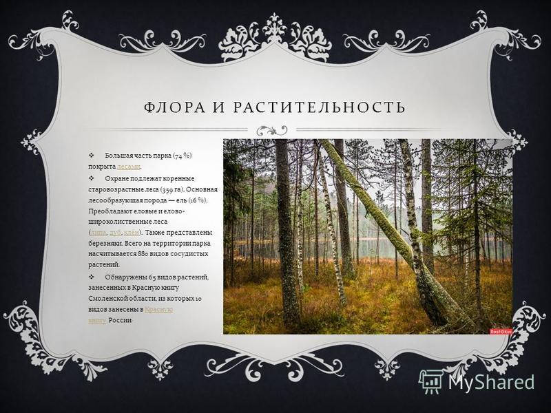 ФЛОРА И РАСТИТЕЛЬНОСТЬ Большая часть парка (74 %) покрыта лесами. лесами Охране подлежат коренные старовозрастные леса (359 га ). Основная лесообразующая порода ель (16 %). Преобладают еловые и елово - широколиственные леса ( липа, дуб, клён ). Также