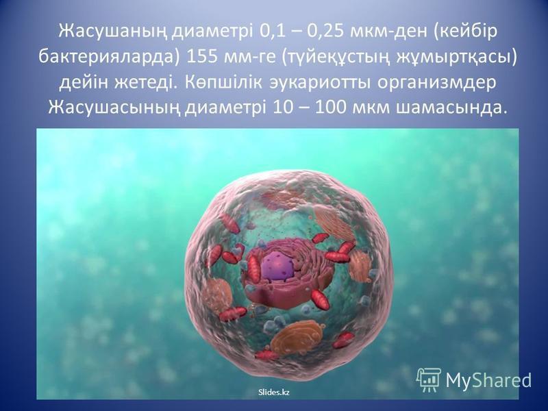 Жасушаның диаметрі 0,1 – 0,25 мкм-ден (кейбір бактерияларда) 155 мм-ге (түйеқұстың жұмыртқасы) дейін жетеді. Көпшілік эукариоты организмдер Жасушасының диаметрі 10 – 100 мкм шамасында. Slides.kz