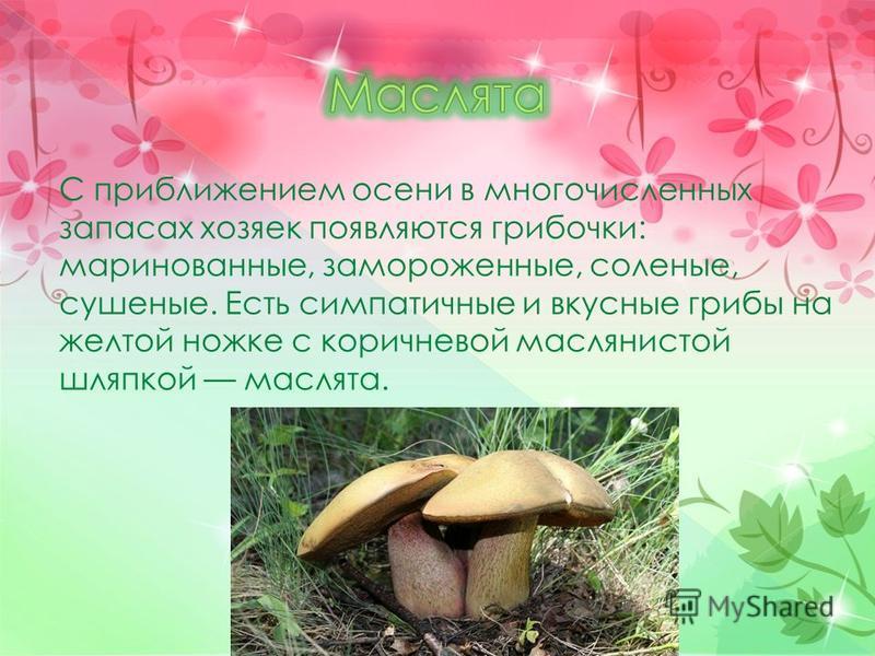 С приближением осени в многочисленных запасах хозяек появляются грибочки: маринованные, замороженные, соленые, сушеные. Есть симпатичные и вкусные грибы на желтой ножке с коричневой маслянистой шляпкой маслята.
