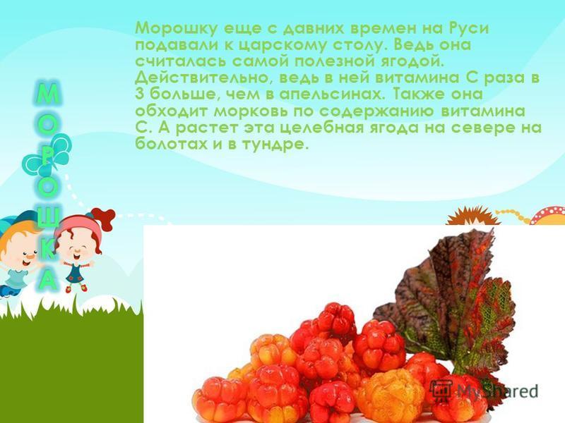 Морошку еще с давних времен на Руси подавали к царскому столу. Ведь она считалась самой полезной ягодой. Действительно, ведь в ней витамина С раза в 3 больше, чем в апельсинах. Также она обходит морковь по содержанию витамина С. А растет эта целебная