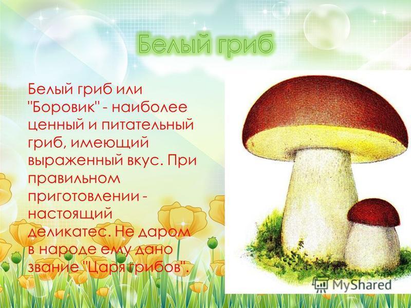 Белый гриб или Боровик - наиболее ценный и питательный гриб, имеющий выраженный вкус. При правильном приготовлении - настоящий деликатес. Не даром в народе ему дано звание Царя грибов.