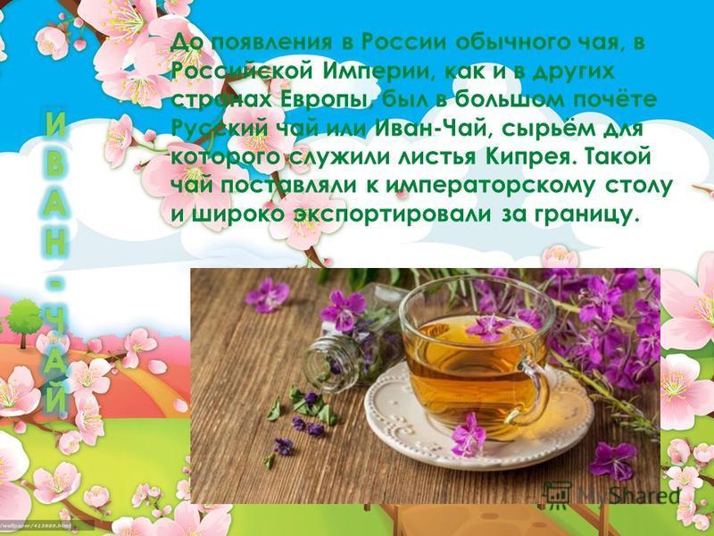 До появления в России обычного чая, в Российской Империи, как и в других странах Европы, был в большом почёте Русский чай или Иван-Чай, сырьём для которого служили листья Кипрея. Такой чай поставляли к императорскому столу и широко экспортировали за