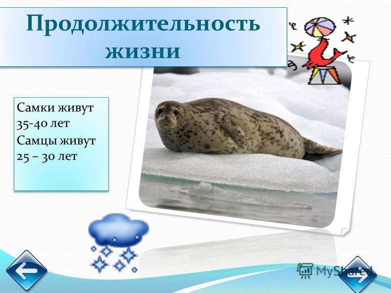 Самки живут 35-40 лет Самцы живут 25 – 30 лет Самки живут 35-40 лет Самцы живут 25 – 30 лет Продолжительность жизни