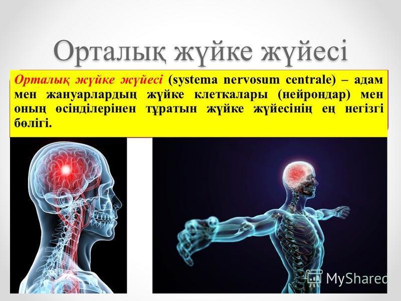 Орталық жүйке жүйесі Орталық жүйке жүйесі (systema nervosum centrale) – адам мен жануарлардың жүйке клетка лары (нейрон дар) мен оның өсінділерінен тұратын жүйке жүйесінің ең негізгі бөлігі.