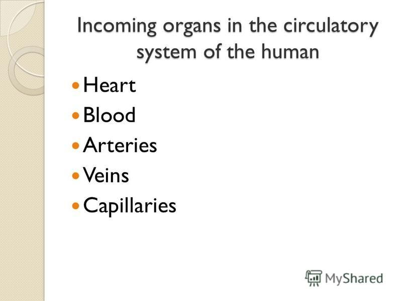 Incoming organs in the circulatory system of the human Heart Blood Arteries Veins Capillaries