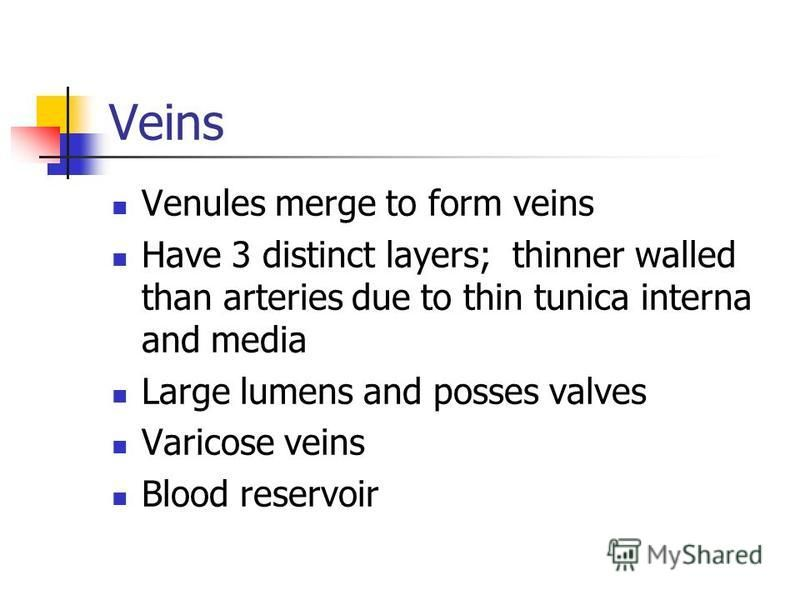 Veins Venules merge to form veins Have 3 distinct layers; thinner walled than arteries due to thin tunica interna and media Large lumens and posses valves Varicose veins Blood reservoir