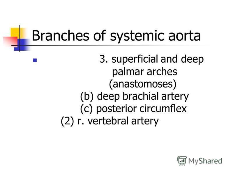 3. superficial and deep palmar arches (anastomoses) (b) deep brachial artery (c) posterior circumflex (2) r. vertebral artery Branches of systemic aorta