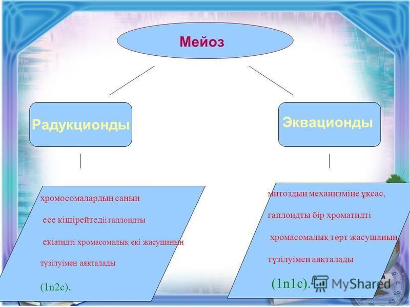 Мейоз Радукционды Эквационды хромосомалардың санин эссе кішірейтед іі гаплоидты екі атидті хромосомалық екі жасушаның түзілуімен аяқталады (1n2c). митоздың механизміне ұқсас, гаплоидты бір хроматидті хромосомалық төрт жасушаның түзілуімен аяқталады (