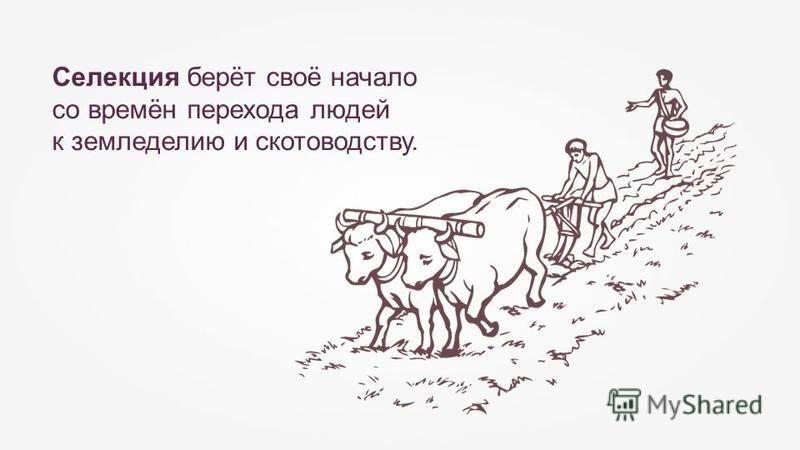 Селекция берёт своё начало со времён перехода людей к земледелию и скотоводству.