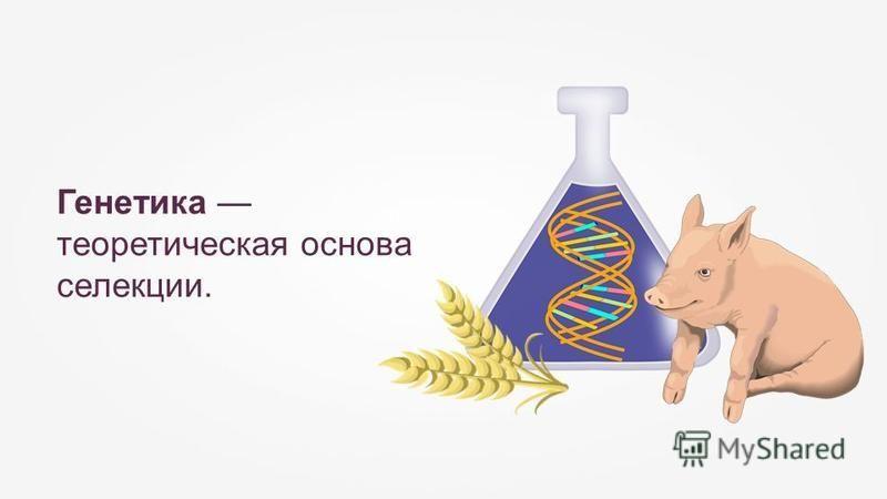 Генетика теоретическая основа селекции.