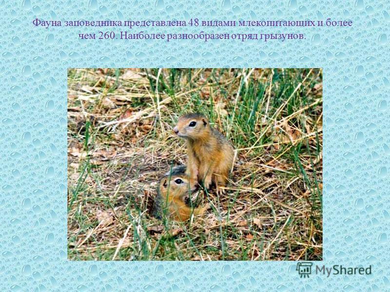 Фауна заповедника представлена 48 видами млекопитающих и более чем 260. Наиболее разнообразен отряд грызунов.