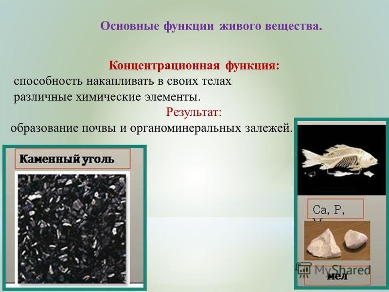 Основные функции живого вещества. Концентрационная функция: способность накапливать в своих телах различные химические элементы. Результат: образование почвы и органоминеральных залежей.