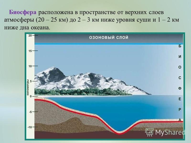 Биосфера расположена в пространстве от верхних слоев атмосферы (20 – 25 км) до 2 – 3 км ниже уровня суши и 1 – 2 км ниже дна океана.