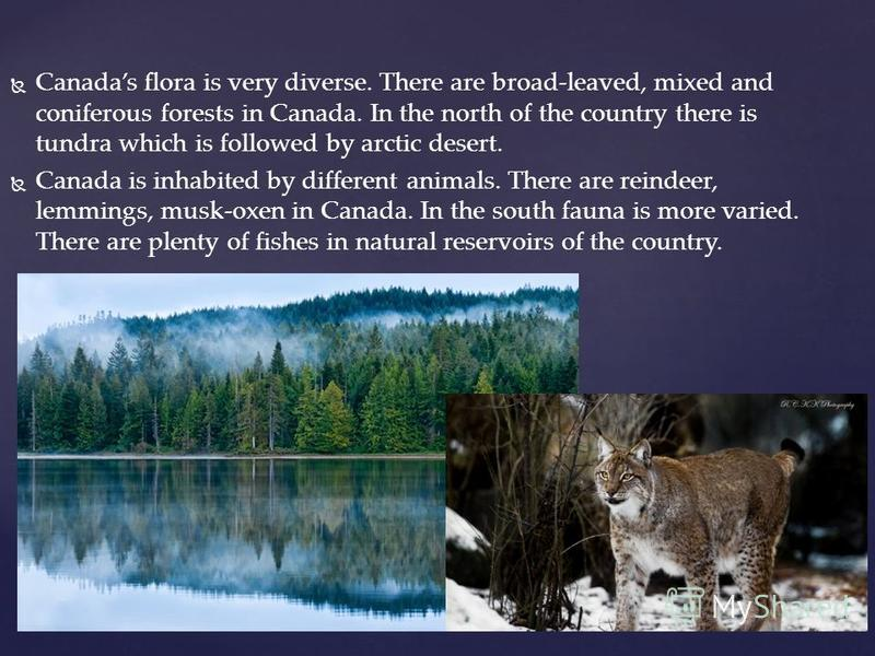 Canadas flora is very diverse. There are broad-leaved, mixed and coniferous forests in Canada. In the north of the country there is tundra which is followed by arctic desert. Canada is inhabited by different animals. There are reindeer, lemmings, mus