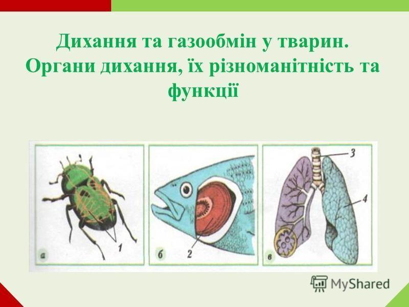 Дихання та газообмін у тварин. Органи дихання, їх різноманітність та функції