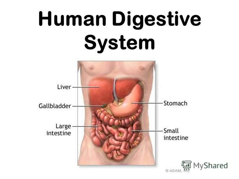 Human Digestive System Ingestion Mouth