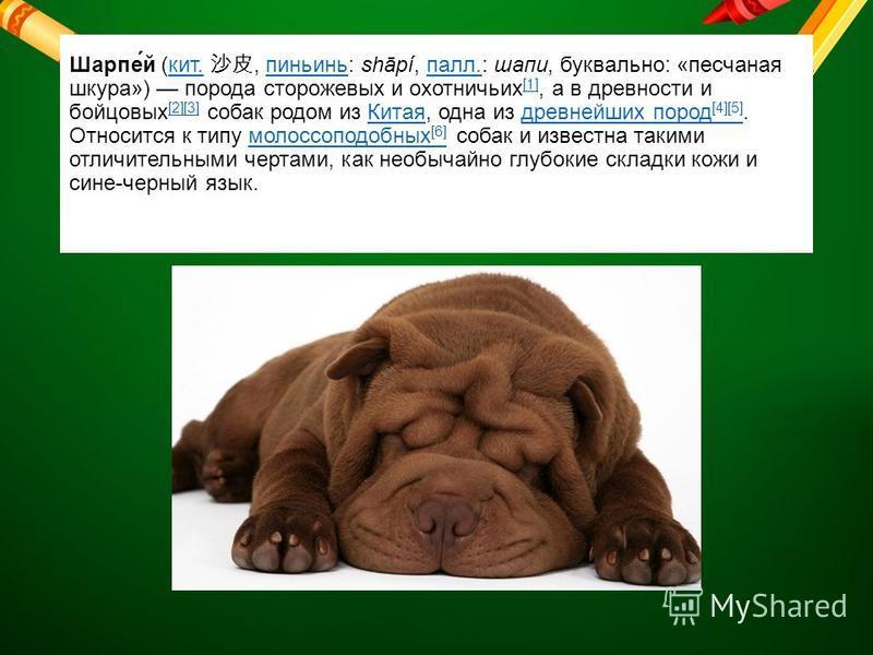 Шарпе́й (кит., пиньинь: shāpí, пал.: шапки, буквально: «песчаная шкура») порода сторожевых и охотничьих [1], а в древности и бойцовых [2][3] собак родом из Китая, одна из древнейших пород [4][5]. Относится к типу молоссоподобных [6] собак и известна