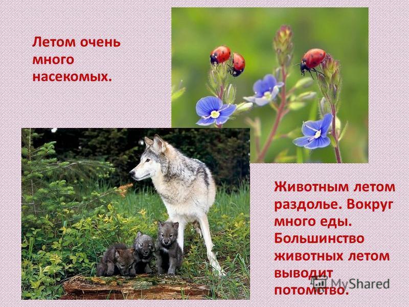 Летом очень много насекомых. Животным летом раздолье. Вокруг много еды. Большинство животных летом выводит потомство.
