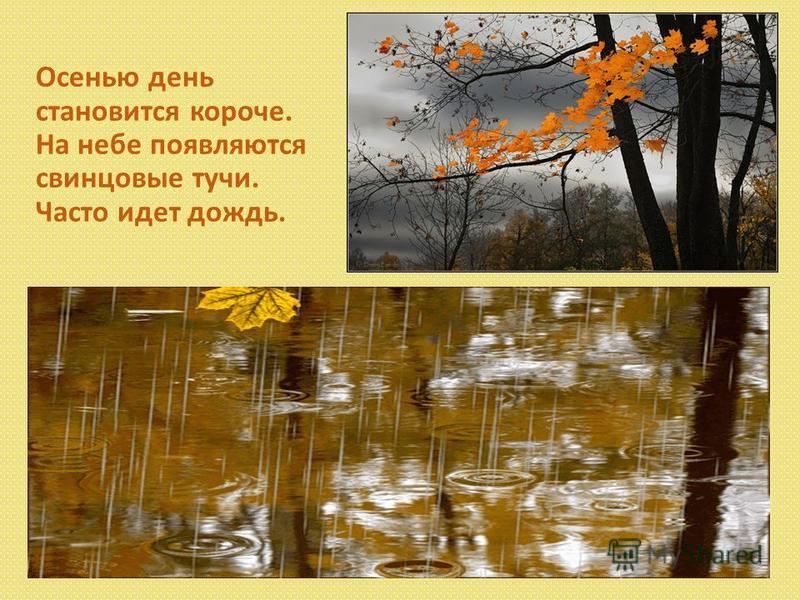 Осенью день становится короче. На небе появляются свинцовые тучи. Часто идет дождь.