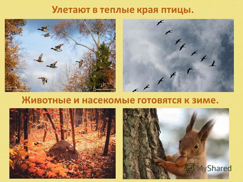 Улетают в теплые края птицы. Животные и насекомые готовятся к зиме.